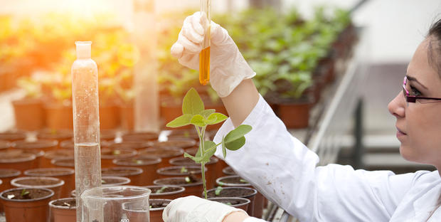 BTS en agronomie : est-ce intéressant de faire ses études à distance?